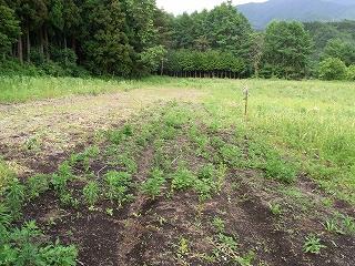 2009_0617katashina0013.jpg