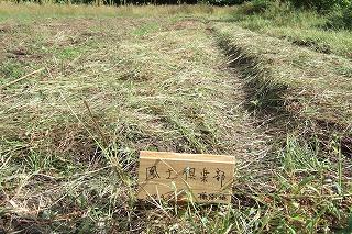 2008_0923katashina0027.jpg