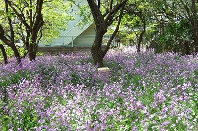 2009_0419mitukai0010.jpg