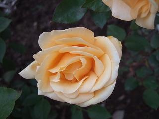 e-2008_0517bee0059.jpg
