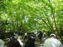 kyoto 060504 162s.jpg