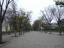 ss-2007_0412keyakinamiki0001.jpg